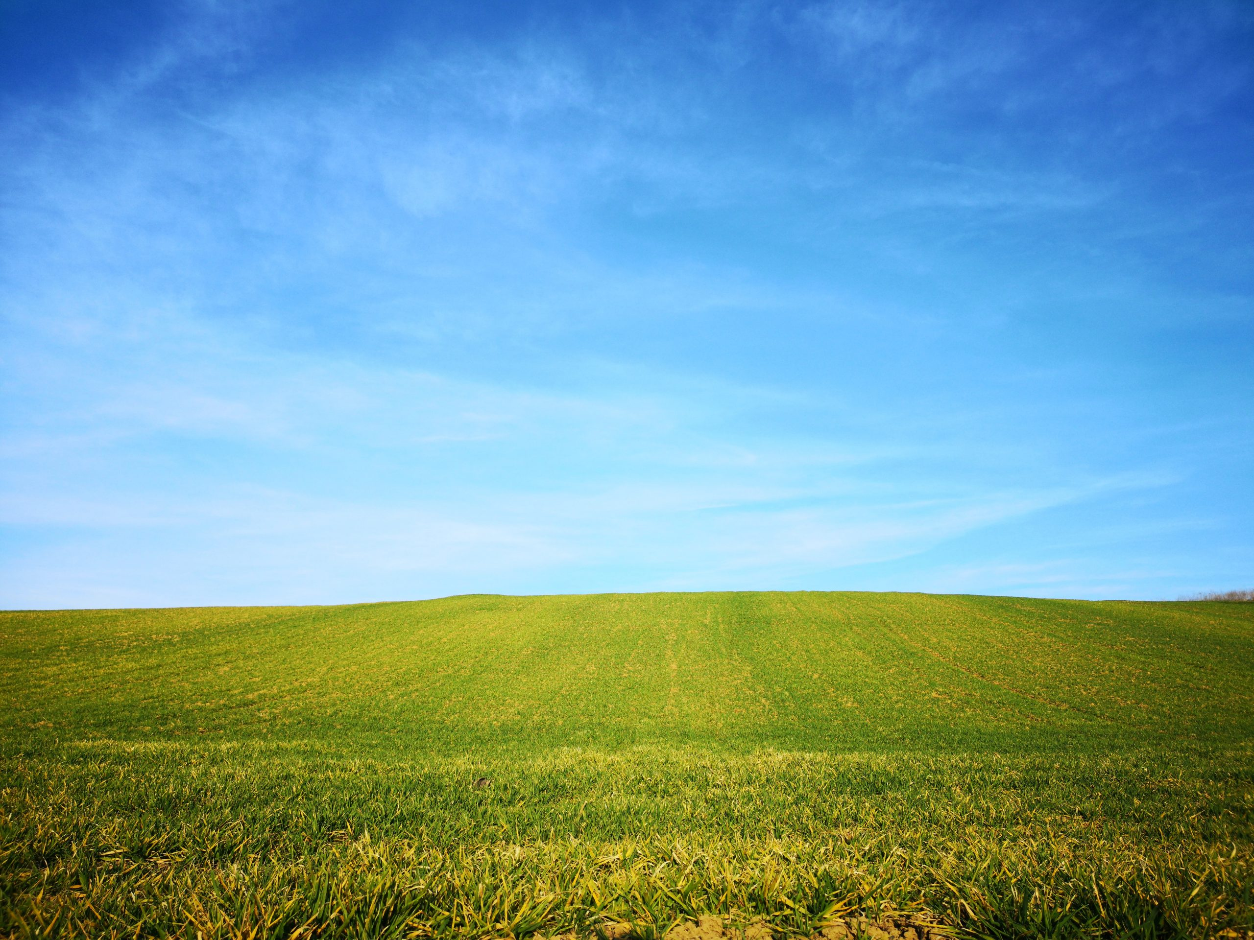 windows-xp-bliss-default-wallpaper